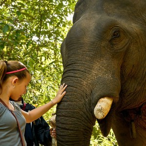 petting asian elephant